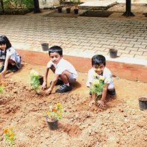 Students turn green ambassadors for World Environment Day