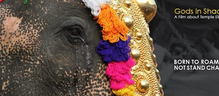 Cruelity on Temple Elephants - Award wining documentary to be screened in Delhi