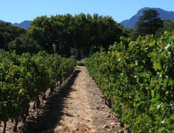 Vineyards with manor house