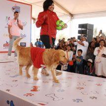 Pets Extravaganza at Happy Dog Carnival 2017
