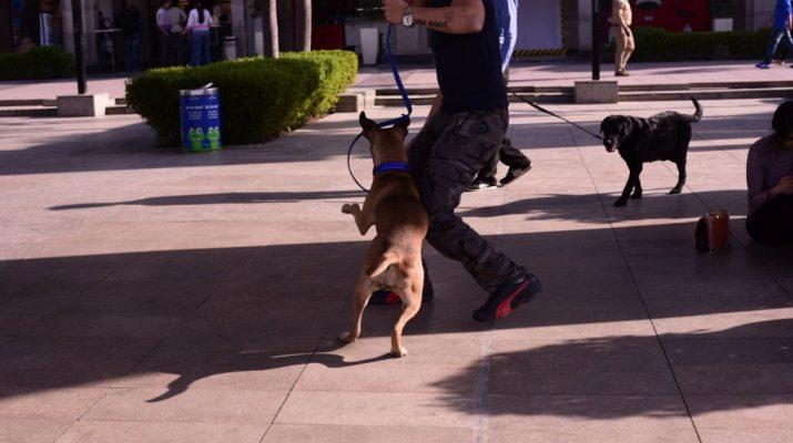 Puppy Love Fest at DLF Place - Saket 2