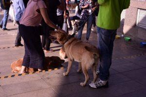 Puppy Love Fest at DLF Place - Saket 3